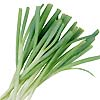 Spring Onions Evergreen