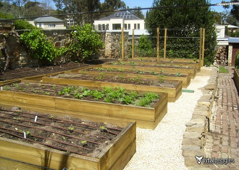 Timber Raised Bed Gardens