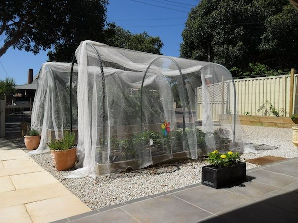 Vegetable hoop house with white netting