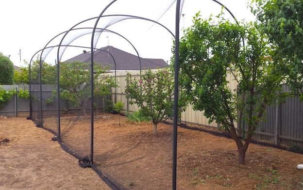 Tree hoop house for fruit protection from birds and pests
