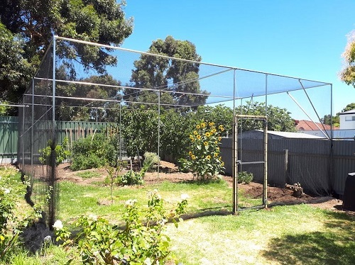 Adelaide fruit trees hoop houses