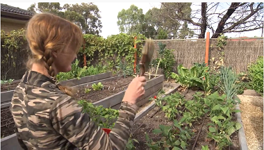 Vegetable garden maintenance and services in Adelaide